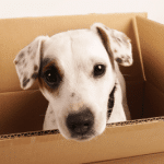 Tips for relocating with pets